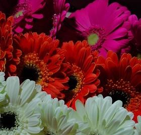 В преддверии женского праздника предприниматели привозят авиатранспортом в СО цветы и декоративную зелень из стран ближнего и дальнего зарубежья.