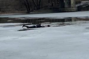 Самарец спас собаку, провалившуюся под лед К счастью, обоим удалось выбраться.