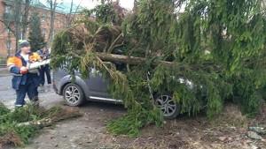 Дерево упало на проезжающий автомобиль, водитель скончался. После этого потерявшая управление машина протаранила еще два автомобиля.