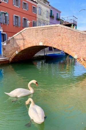 В каналах Венеции из-за отсутствия туристов очистилась вода, появились лебеди