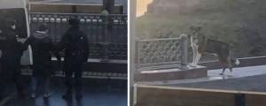 Полицейские задержали москвича, который гулял с собакой в сквере Патриарших прудов. При этом они не дали ему отвезти собаку домой, и она осталась на улице одна.
