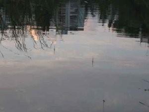 Власти объяснили, почему в озере на Аэродромной в Самаре погибает рыба