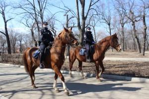 В Самаре конная полиция ежедневно патрулирует городские парки