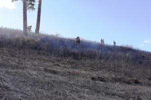 Количество выездов пожарных подразделений на подобные загорания достигает максимальных значений: до 200 раз в сутки.