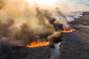 Пожары в Чернобыльской зоне отчуждения стали опасными верховыми