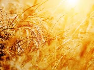 Ранее в Минсельхозе напомнили, что квота на экспорт зерна из России в размере 7 млн тонн выбрана в полном объеме.