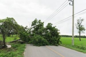 75 деревьев повалены во вторник сильными порывами ветра в Москве и Московской области, повреждены 10 автомобилей.