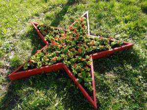 В Самаре появится 75 цветочных композиций - звезд Победы