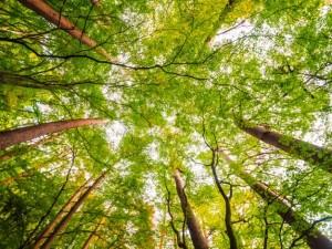 Введены ограничения на въезд транспортных средств и пребывание граждан в лесах.