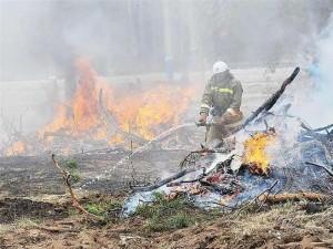 За последние 10 дней в СО произошло 2 лесных пожара на площади 0,28 га (оба — в Тольятти), а также зарегистрировано 84 случая возгорания сухой травы