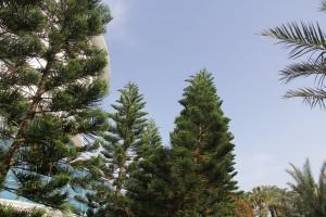 Курорты Кипра смогут возобновить приём туристов с 15 июня