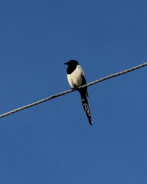 Самарские энергетики заботятся о птицах