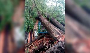 Штормовой ветер в Кузбассе повредил почти 150 крыш, повалил 280 деревьев и повредил линии электропередачи, оставив многих без электричества.
