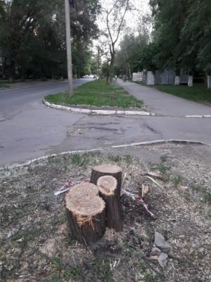В центре Самары вырубили аллею деревьев. Очевидцы насчитали 78 стволов