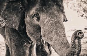 В Ботсване более сотни слонов умерли при загадочных обстоятельствах