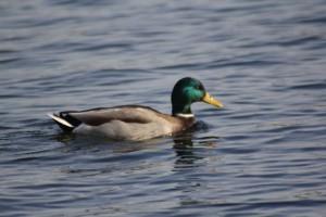 Уровень воды в озере на Металлурге в Самаре повысился на 5 см