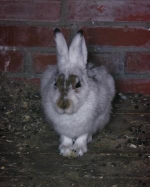 В Самарской области два подростка украли у женщины кроликов