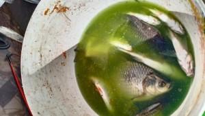 Река Уса окрасилась в ядовито-зеленый цвет