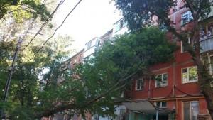 В Самаре мусоровоз уронил дерево на жилой дом
