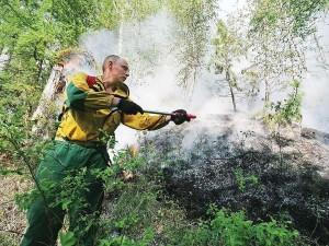 Глава региона поручил проанализировать эффективность работы по охране лесов на территории всей области.