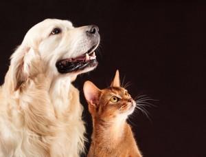 Строительство питомника, который рассчитан на 300 собак и 50 кошек, практически завершено.