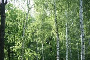 Сад Памяти высадит 27 миллионов деревьев в честь 27 миллионов погибших