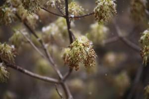В Самарской области ожидают заморозки