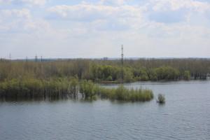 Рыбак из Самарской области поймал 50-килограммового сома