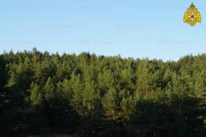 В Самарской области введен запрет на посещение лесов