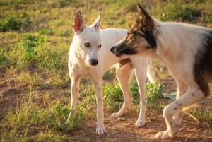 Двум мальчикам удалось убежать, но одно из животных вцепилось зубами в их более медленного друга.
