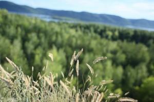 В Самарской области продлен запрет на пребывания граждан в лесах