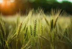 Сбербанк рассказал о перспективах развития аграрной отрасли