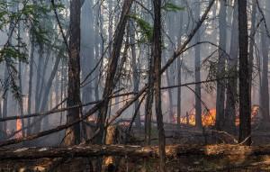 По данным пресс-службы регионального ГУ МЧС, причиной возгорания стали аномально жаркая погода и неосторожное обращение людей с огнем.