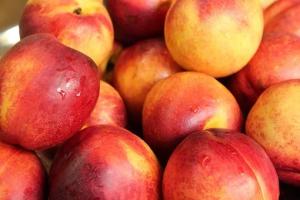 Инспекторы Управления Россельхознадзора по Самарской области задержали партию свежих нектаринов, зараженных восточной плодожоркой