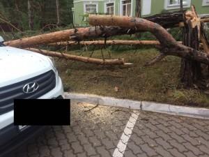 В Тольятти ночью ураган валил деревья