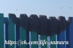 В Самаре рой пчел атаковал городской пляж