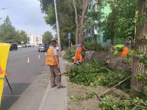 Всего по городу было зафиксировано 35 упавших дерева, из них 15 на проезжей части дорог.