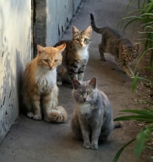 Самарцы соберут «Корзину доброты» для бездомных животных