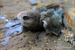 В Самарской области из-за жары птенцы выпрыгивают из гнезд
