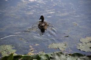 В Самаре озера начали чистить водорослями