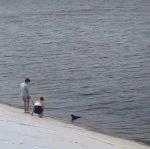 В Перми подростки спасли собаку, которая не могла выбраться из реки