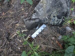 В Тольятти в лесу нашли наркодилеров