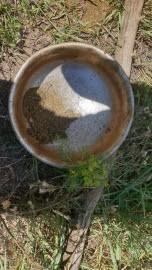 Недалеко от села Курумоч мужчина жарил на костре части дикорастущего растения в металлической емкости. Возбуждено уголовное дело.