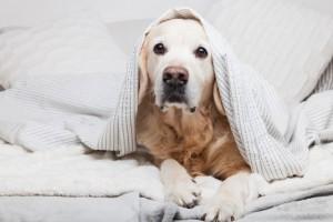 Теперь владельцы питомцев опасаются, что их собак используют для решения проблемы нехватки продовольствия в стране.