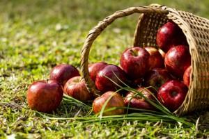 Важно помнить, что поговорка: «Яблоко на обед – и всех болезней нет» актуальна не для всех, так как при определенных болезнях употребление яблок необходимо уменьшить, а то и вовсе прекратить.
