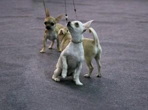 Россиян могут обязать маркировать домашних животных за свой счет