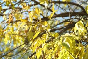 Россиян предупредили об опасности опавшей листвы в парках