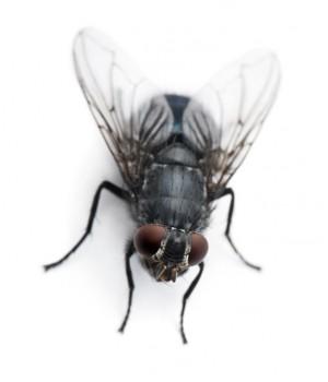 Мужчина попытался убить насекомое электрической мухоловкой.