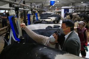 В Самарской области усиливается работа по мониторингу качества молока