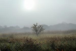 Самарскую область в выходные накроет туман